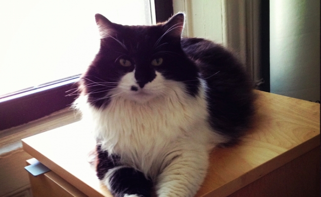 Help save Listen Up Philip auteur Alex Ross Perry's Fluffy The Cat