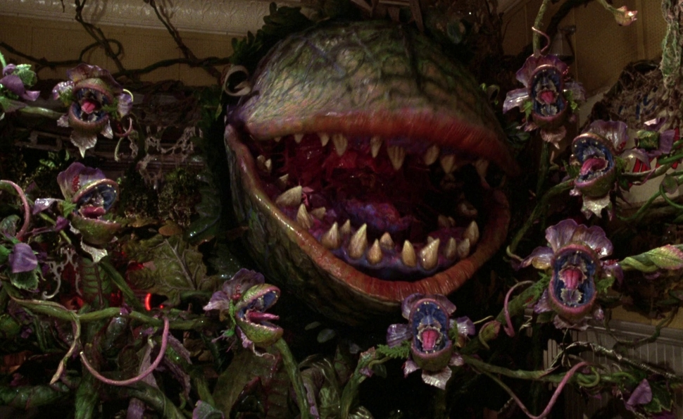 Forum: Little Shop Of Horrors