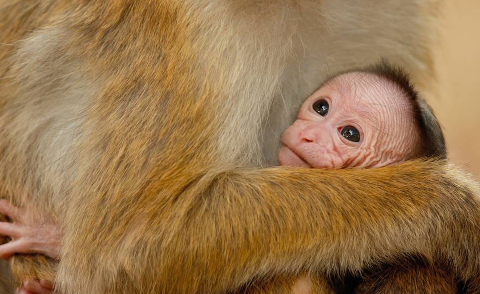 Disneynature is creating a new generation of documentary fans