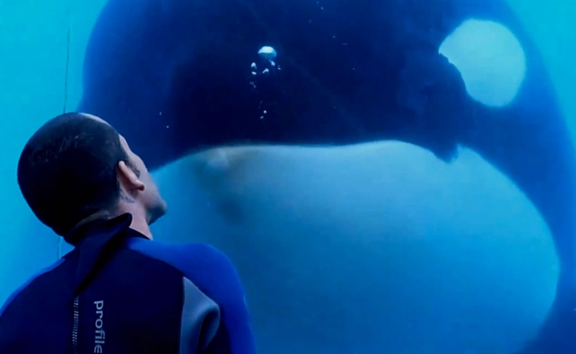 Pixar changes the ending of Finding Dory in response to SeaWorld documentary Blackfish
